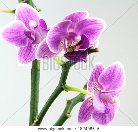 Beautiful pink orchid ,close up image .