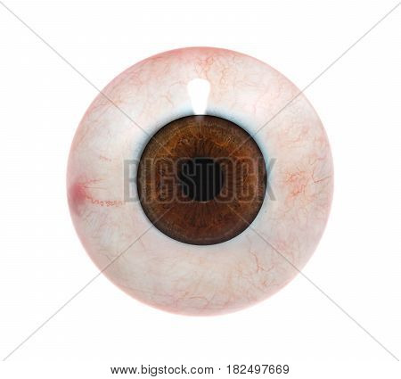 Human Eyeball isolated on white background. 3D render