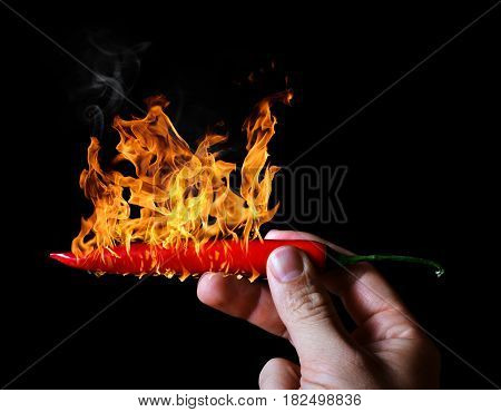 Hand holding burning red hot chili peppers on black background.