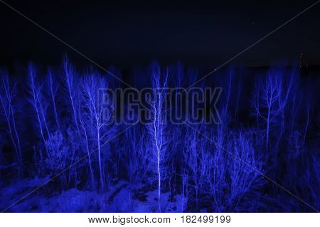 Night Landscape With Blue Trees With No Leaves.