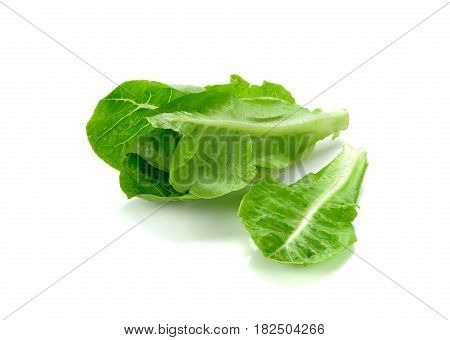 Cos Lettuce Isolated on White Background. fresh green cos
