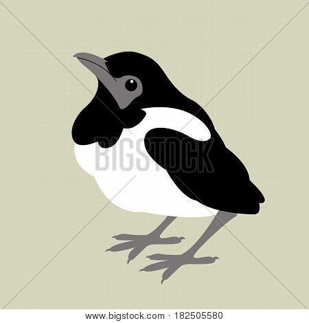 magpie baby  vector illustration style Flat  side