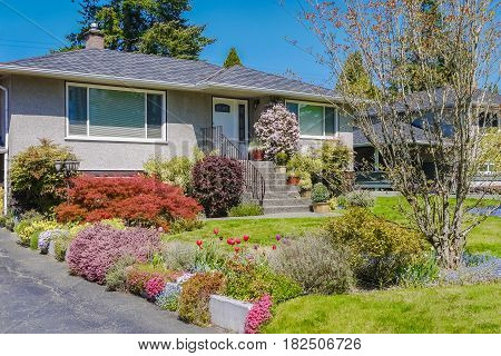 Modest family house with blossoming flowers on the front yard