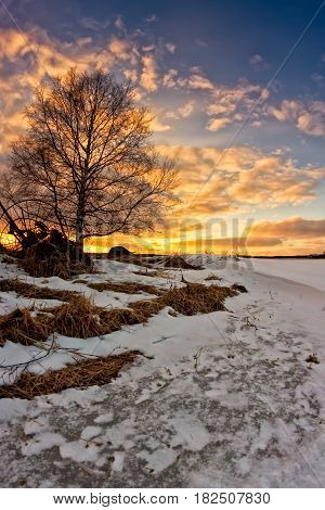 A birch tree and an old farming tool in the beautiful sunset at the fileds of the Northern Finland. The sun has already melted some of the snow.