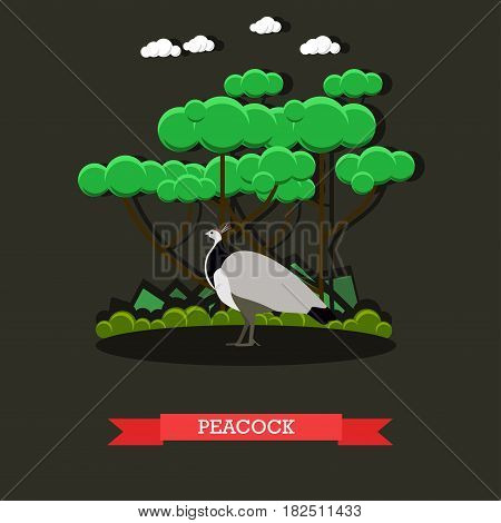 Vector illustration of beautiful peacock roaming free inside zoo. Exotic zoo animals concept design element in flat style.