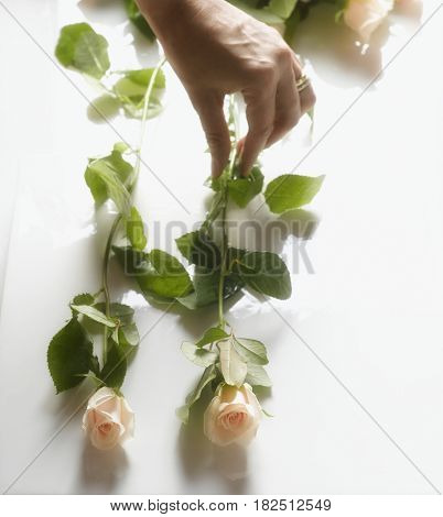 Woman placing cut roses on table