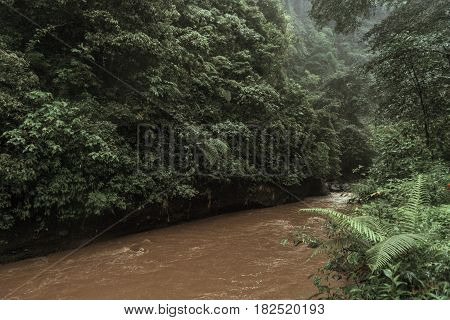 Tropical dirty river with palm trees on both shores