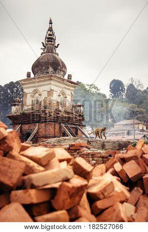 A monkey walks past one of the many chaityas and rising smoke from the burning funeral pyers at Pashupatinath temple. Kathmandu Nepal.