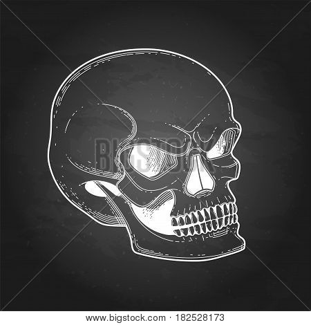 Graphic skull with fearful smile. Vector tattoo art isolated on the chalkboard