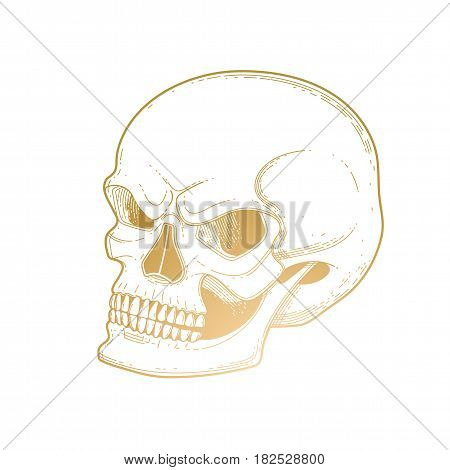 Graphic skull with fearful smile. Vector tattoo art in golden colors