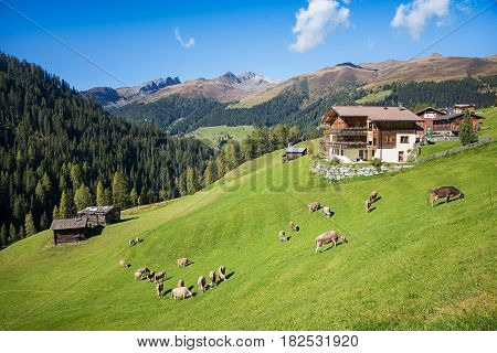 Idyllic Swiss Landscape With Cattle Herd Grazing On The Hillside And Farmstead