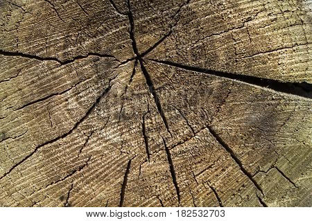 Cracked middle section of wood. Natural material texture.Wooden surface background