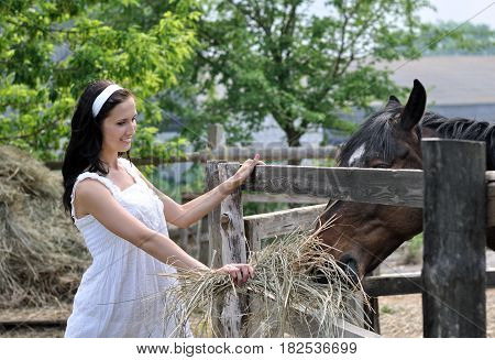young attractive woman feeds horse in the farm in summer day