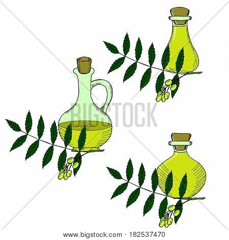 Ayurvedic herbs neem with oil bottles jug. Set. Neem or nimtree medicinal plant. Hand drawing ink illustration. Design for essential oil natural cosmetics treatment aromatherapy homeopathy.