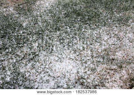 Close up of melting snow on green grass, winter