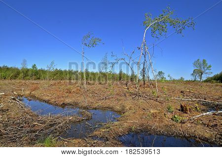 A forest has been clear cut by a wood company in the cycle of tree farming