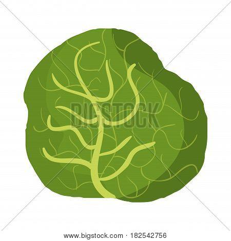 fresh letuce vegetable icon vector illustration design