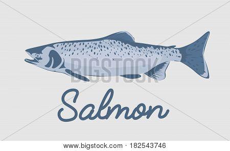 Salmon fish vector illustration isolated on white background.