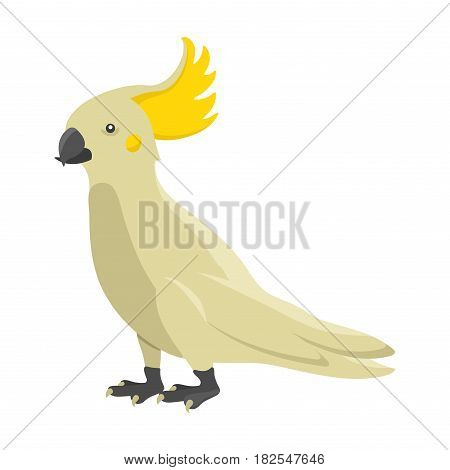 Cartoon tropical parrot wild animal bird vector illustration and wildlife cute feather zoo color nature vivid perch tropics fly fauna jungle pretty macaw. Wing bright ara flying colourful.