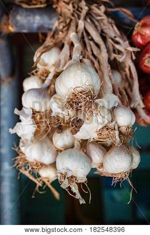 Fresh Organic Garlic.