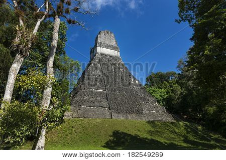 Pyramid in the ancient Maya City of Tikal in Guatemala Central America