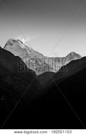 Nepal March 2017: The peaks of Annapurna South and Hiunchuli as viewed through the valley looking up from the village of Ulleri at sunrise in black and white. Annapurna region Nepal.