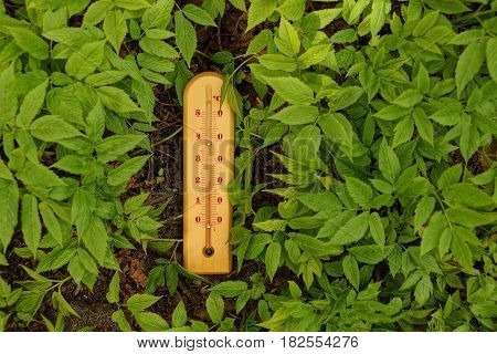 A thermometer on the ground amid grass and green leaves