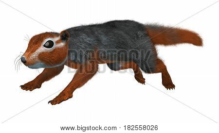 3D Rendering Red Bush Squirrel On White