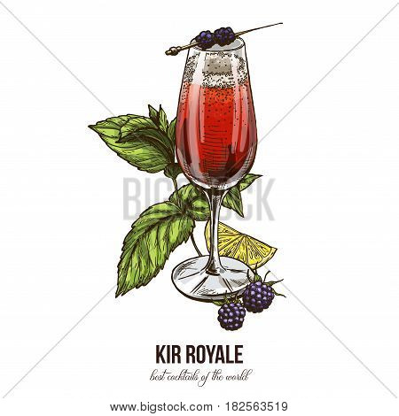 Kir Royale cocktail with blackberries, vector illustration, hand drawn sketch, colored