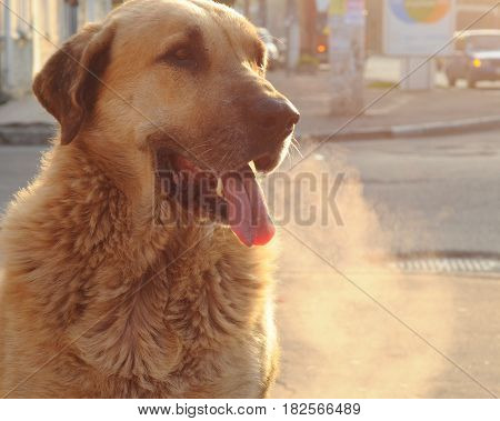 Image of dog. Winter sunny day. Homeless dog