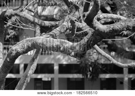 BLACK AND WHITE PHOTO OF TREE BRANCHES UNDER SUNLIGHT