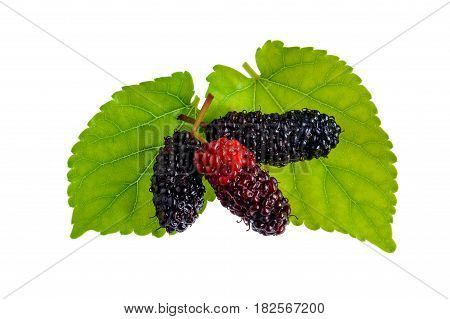Red mulberry nature isolate on white background