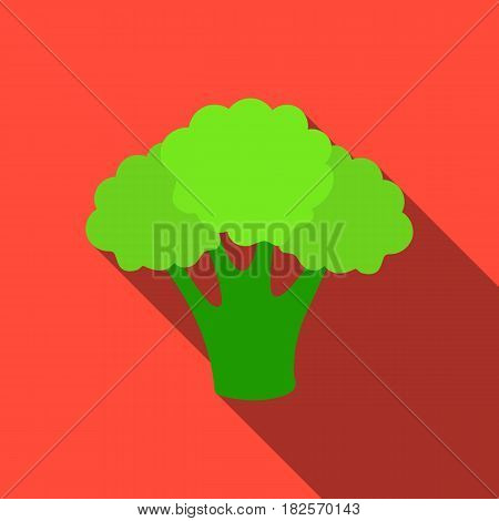 Broccoli icon flate. Singe vegetables icon from the eco food flate.