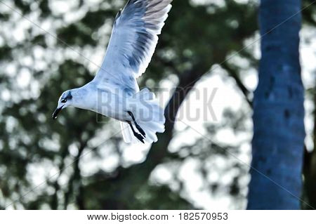 bird in flight in mid air with wings up