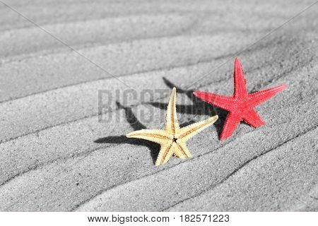 Seastar on beach sand, close up image .
