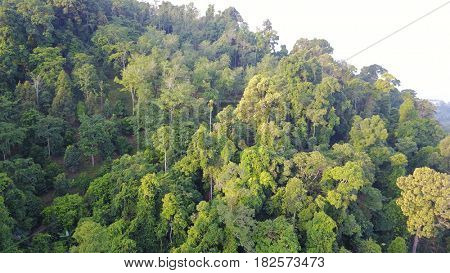 Rain forest (rainforest jungle) aerial view