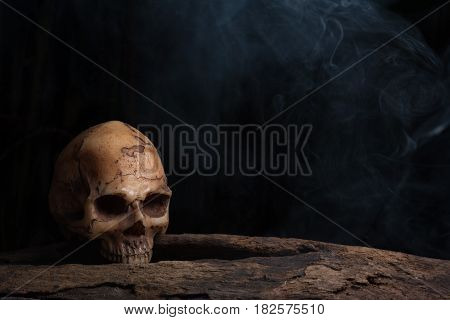 Still life photography with human skull on timber over darkness background with smoke Horror concept