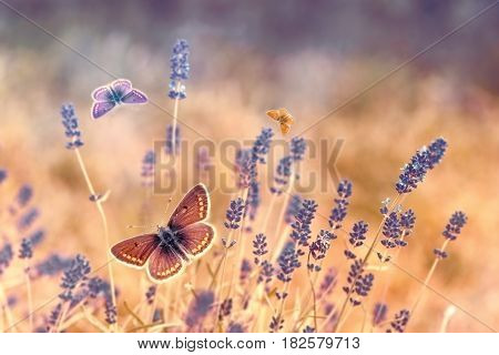 Butterfly flying over lavender, butterflies on lavender, beautiful nature in garden
