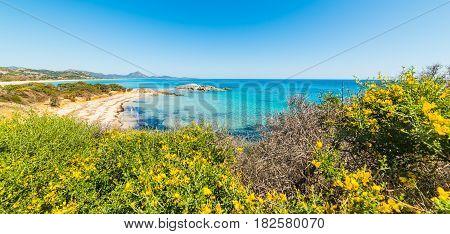 Flowers in Scoglio di Peppino shoreline Sardinia