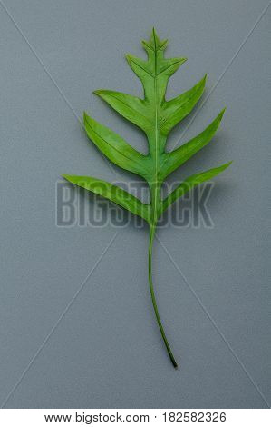 Beautiful Shape Of Fern Leaves Flat Lay On Gray Background. Green Leaves With Copy Space For Design
