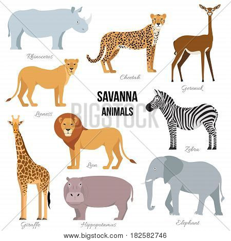 African animals of savanna elephant, rhino, giraffe, cheetah, zebra lion hippo isolated Vector illustration