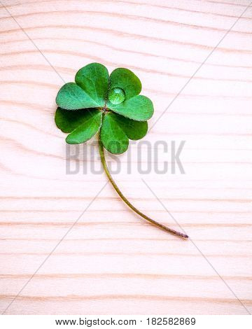 Clover Leaves On Shabby Wooden Background. The Symbolic Of Four Leaf Clover The First Is For Faith,