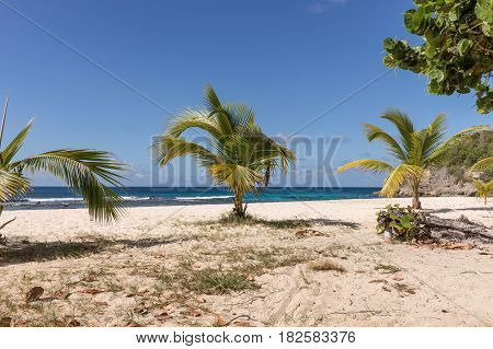 Tropical beach with palm trees in Guadeloupe, Caribbean Sea