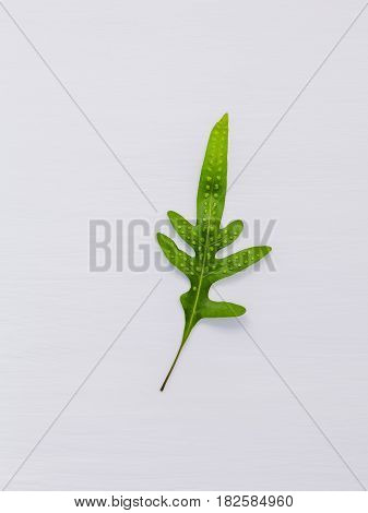 Beautiful Shape Of Fern Leaves Flat Lay On White Wooden Background. Green Leaves With Copy Space For
