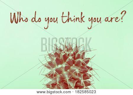 Who Do You Think Cactus