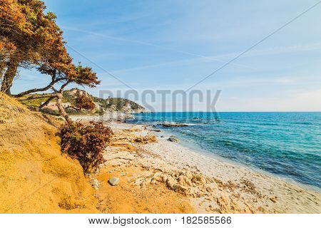 Pine tree in Capo Carbonara in Sardinia