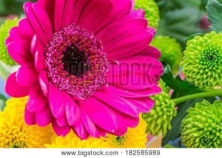 Pink Gerbera Florist Flowers, Close Up. Vertical.