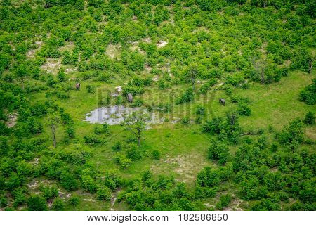 Aerial View Of Elephants In The Okavango.