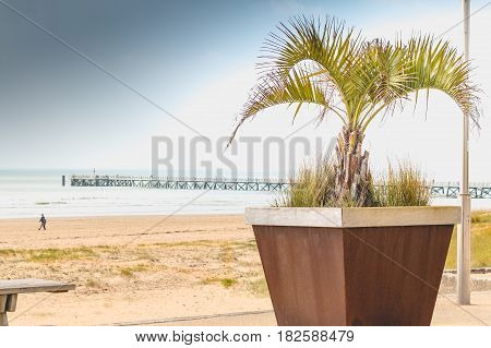 Palm Tree In Pot On The Seafront With A Pontoon