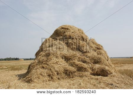 Haystack. Nature. Fields and meadows. Harvesting time.